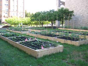 Warrior Demonstration Garden